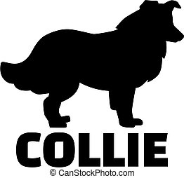 Collie with breed name