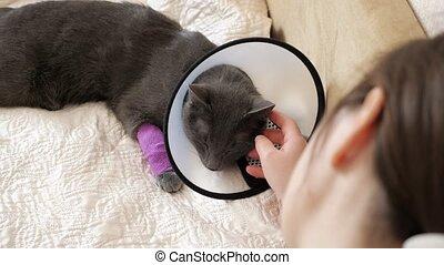 collier, couch., chouchou, chat, anesthésie, vétérinaire, après, femme, caresser, récupération