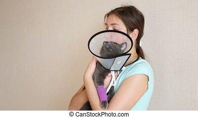 collier, coups, bandé, chat, tient, vétérinaire, femme, ...