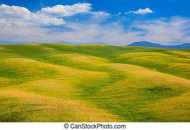 colline rotolare, verde, campi, in, toscana, italia