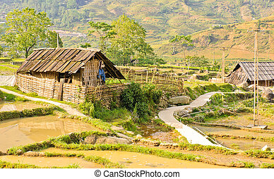 colline, tribu, maison bois
