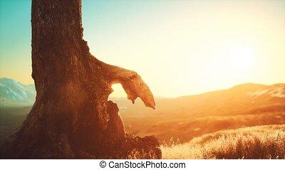 colline, tronc arbre, vieux, coucher soleil, souche