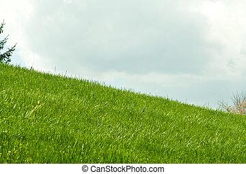 colline verte, nuages, herbeux, fond