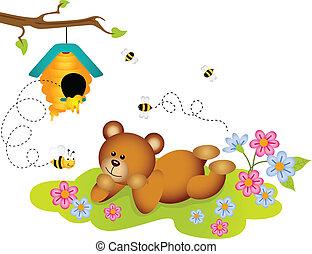 colmeia, urso teddy, admirar