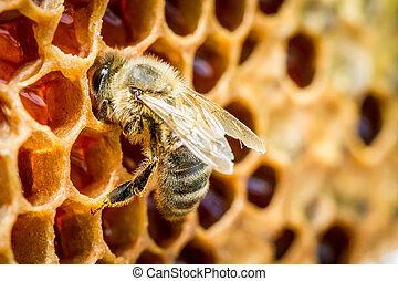 colmena, abejas, arriba, panal, cierre