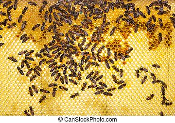 colmena, abejas, panal