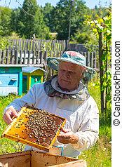 colmena, verificar, apicultor