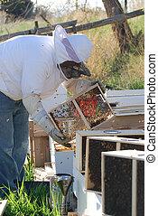 colmenas, apicultor