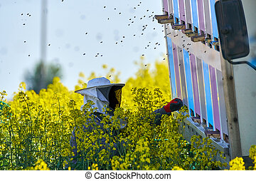 colmenas, guardián, trabajando, abeja