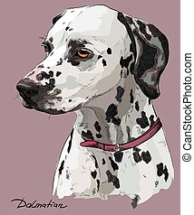 Coloful hand drawing vector portrait of dalmatian