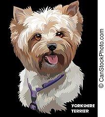 Coloful vector portrait of Yorkshire Terrier - Vector...
