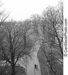 cologne rhine park in the winter black and white