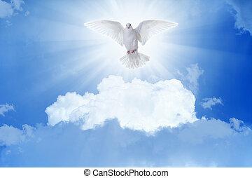 colomba bianca, mosche, cieli