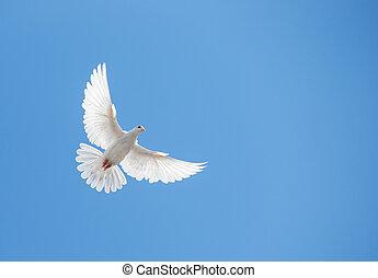 colombe, blanc, voler, ciel