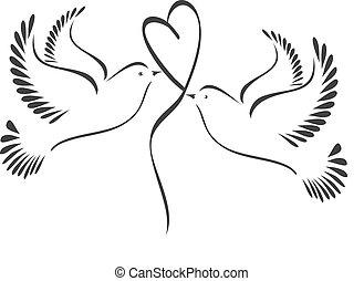 colombe, con, cuore