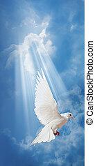 colombe, dans air, à, ailes, grand ouvert