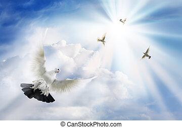 colombe, raggi, solare, volando alto