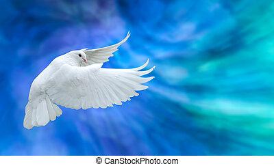 colombe, symbole, blanc, foi