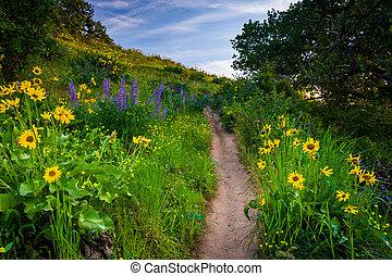 colombia, naturaleza, oregon., mccall, wildflowers, rastro, tom, por, río, conserva, cañón