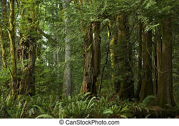 colombie britannique, forêt