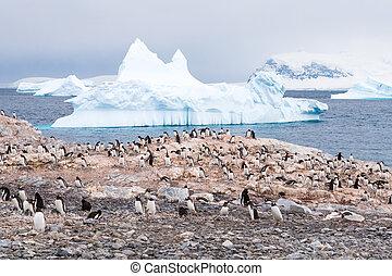 colonia, de, crianza, gentoo, pingüinos, en, cuverville, isla, y, icebergs, en, errera, canal, occidental, antártico, península, antártida
