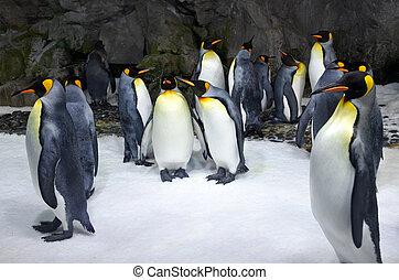 colonia, pingüino, rey