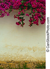 Colonial Wall with Flowers - A colonial wall with a ...