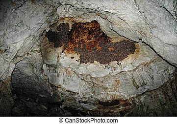 colonie, caverne, chauves-souris