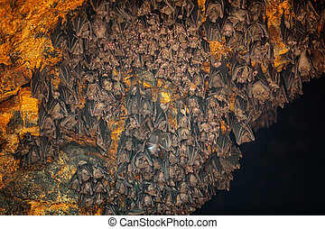 Colony of Bats at Goa Lawah Bat Cave Temple in Bali - Colony...