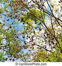 Colony of gray bats on a tree.