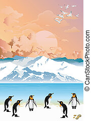 Colony of penguins at dawn