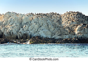 Colony - Flock of birds and several seals on a rock