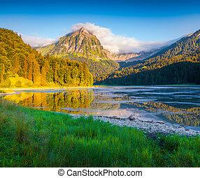 coloré, été, matin, sur, les, incredibly, beau, suisse, lac, obersee