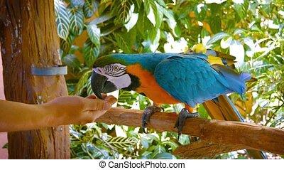 coloré, amical, perroquet, manger, main, tourist's