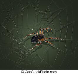 coloré, araignés, toile araignée