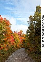 coloré, arbre, érable, pousse feuilles, automne