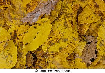 coloré, automne, automne, fond, feuilles, texture.