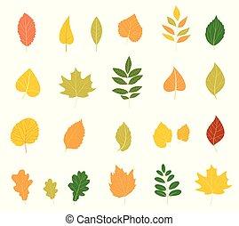 coloré, automne, leaves., ensemble