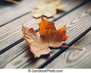 coloré, bois, feuilles, rustique, automne, table, érable