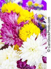coloré, bouquet, isolé, arrière-plan., fleurs blanches