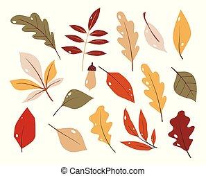 coloré, collection, style., forêt, arrière-plan., ensemble, feuille, blanc, main, dessiné, vector., plat, isolé, automne, dessin animé, leaves.