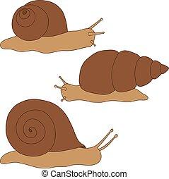 coloré, dessin, snails., ensemble, main.