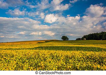 coloré, ferme, champs, bosquet, pennsylvania., printemps