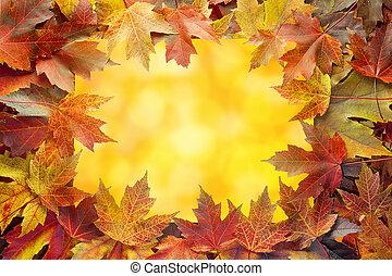 coloré, feuilles, arbre, bokeh, automne, frontière, érable