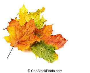 coloré, feuilles autome