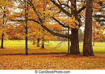 coloré, feuilles, parc, arbres, automne, baissé