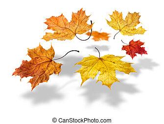 coloré, feuilles, voler, automne, fond, tomber, blanc, érable