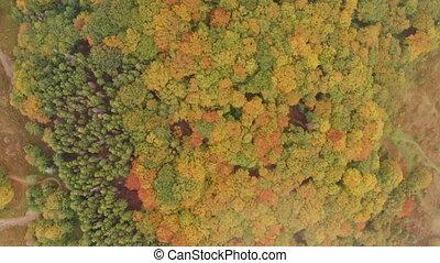 coloré, forests., brumeux, aerial:, sur, vol, automne