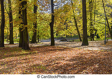 coloré, jour, automne, ensoleillé, parc