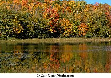 coloré, national, wi, chequamegon-nicolet, forêt, réflexions
